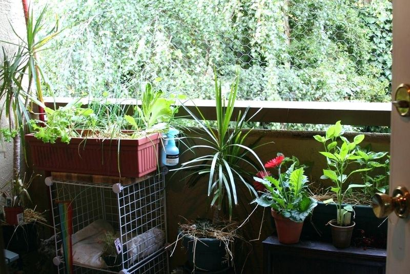 Awesome-balcony-gardens-with-herb-and-provide-bird-wires-for-your-small-balcony.