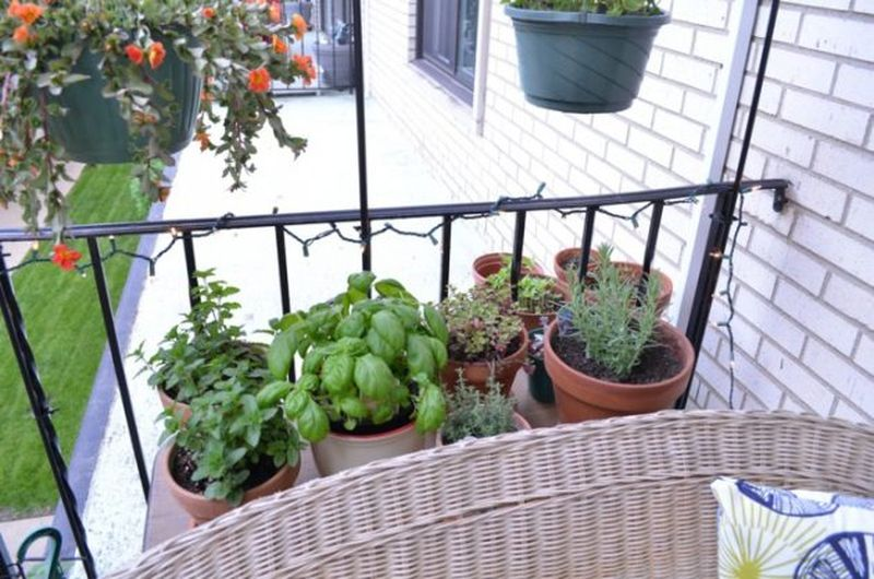 Charming-balcony-herbs-using-a-number-of-clay-pots-next-to-each-other.