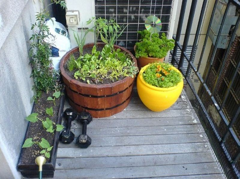 Here-is-one-more-hack-that-will-allow-you-to-grow-your-herbs-balcony-without-occupying-much-space-the-beautiful-one.
