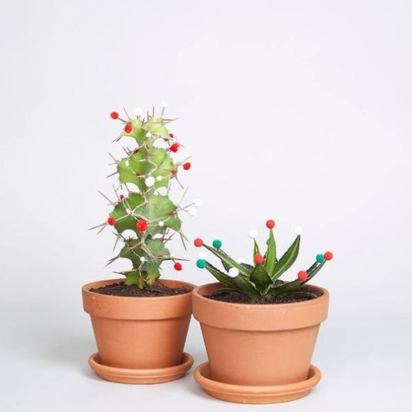 A-christmas-cactus-the-cool-new-x-mas-tree-alternative