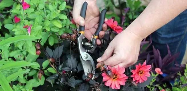 2-container-garden-maintenance-1