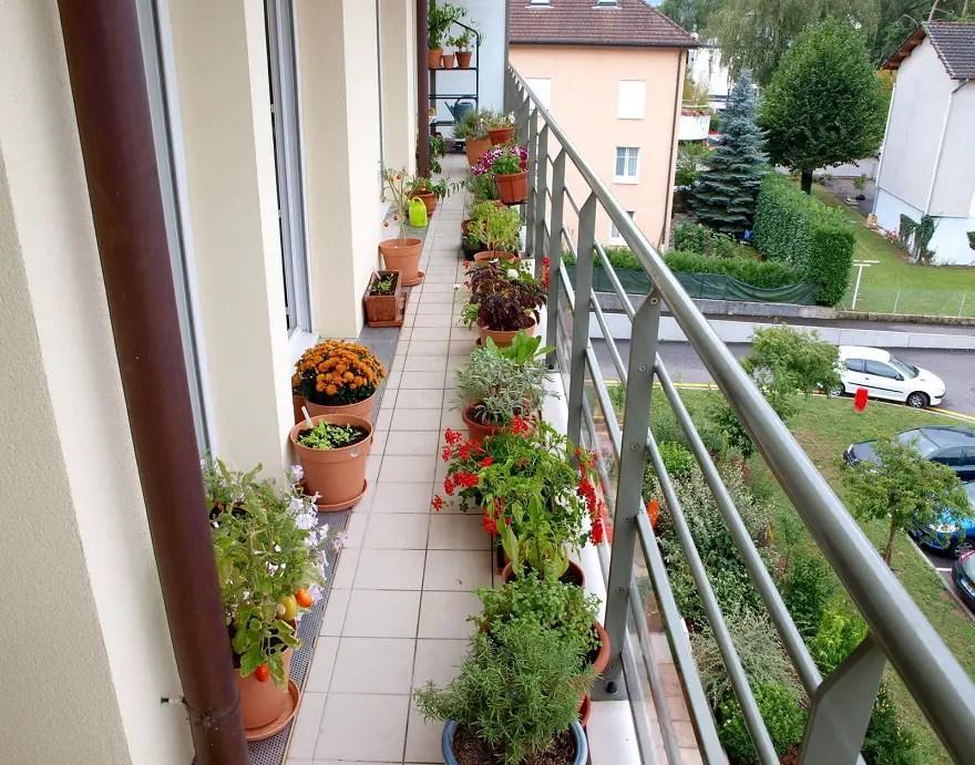 A-long-and-narrow-balcony-garden