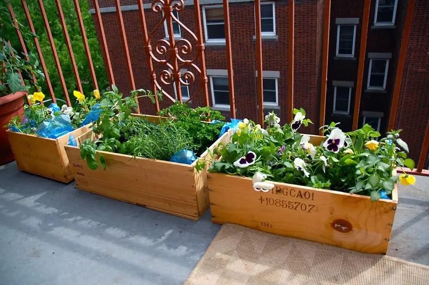 Blooming green balcony garden