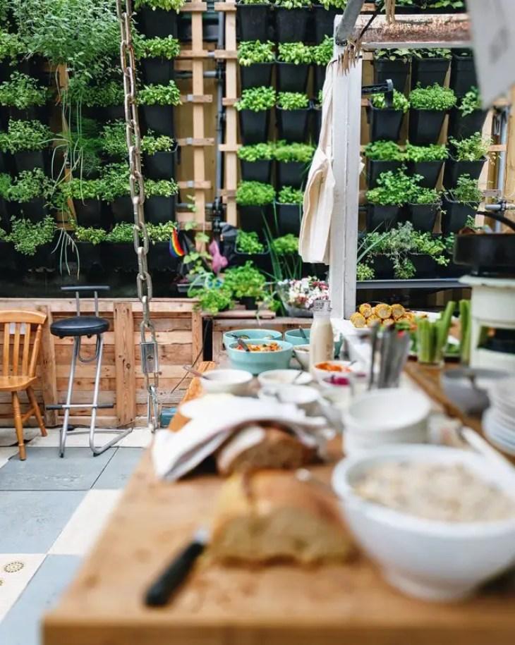 Kitchen-plant-1