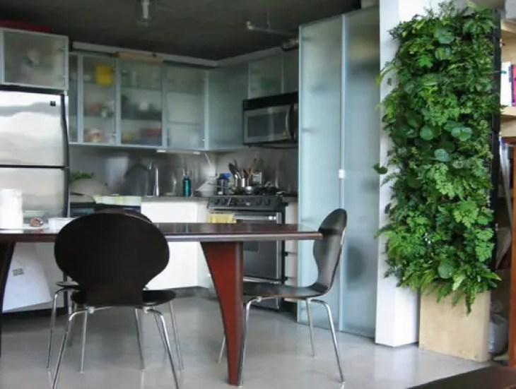 Kitchen-plant-5