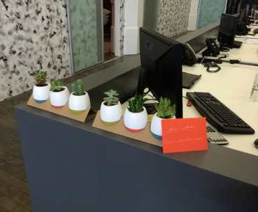Mini-succulents2-768x622-1