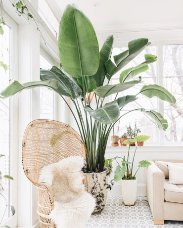 Bohemian-chair-and-indoor-plant-via-@emersonthoreau