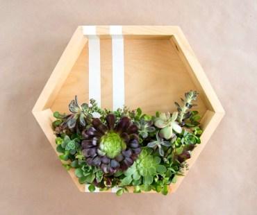 Hexagon-succulent-planter_edited
