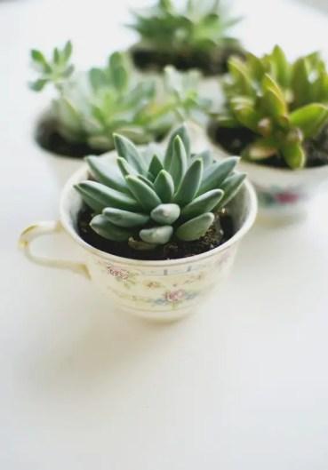 Succulent_planter___love_lola_large_jpg