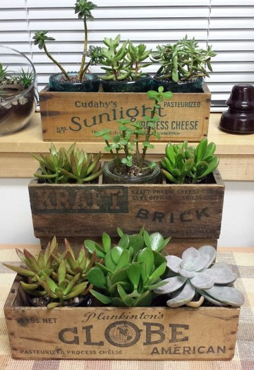 Succulents-planters-vintage-cheese-box-gardening-repurposing-upcycling-succulents