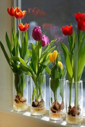 Colorful windowsill Bring Your Spring Vibe More For Home Decoration With The Beauty Of Tulips