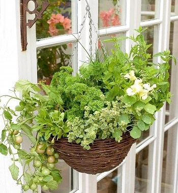 Hanging basket project