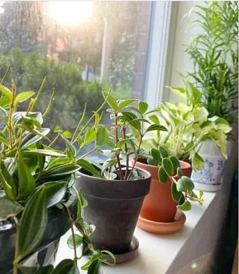 Windowsill garden Exhilarating Garden Ideas That Always Be In Trend And Style