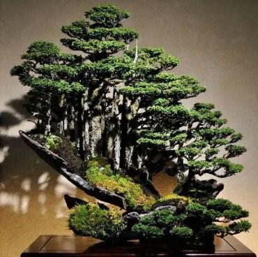 Amazing-indoor-bonsai