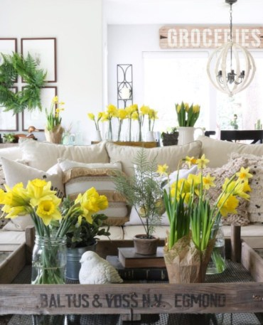 Daffodil-money-shot (1)