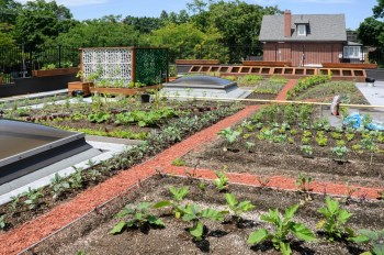 Vegetable gardening on your rooftop