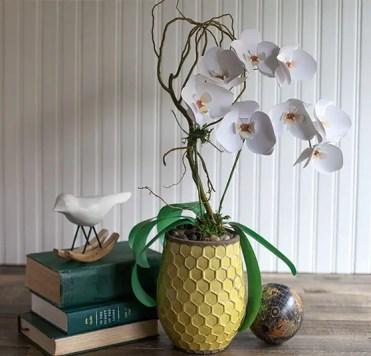 2-paper-orchids