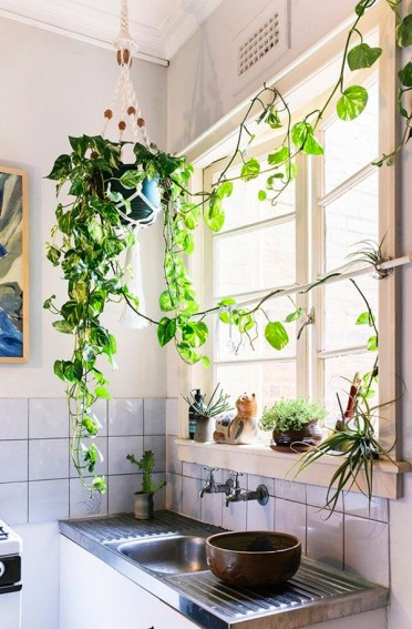2-decorate-home-with-plants21