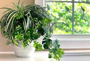 2-diy-fake-plant-decor-spider