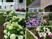 Pretty pink garden for an easy and elegant garden color theme 5