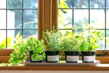 Hydroponic-herb-indoor-garden
