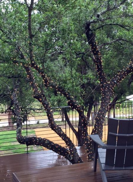 Luci sull'albero