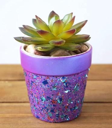 Purple-pot-succulent