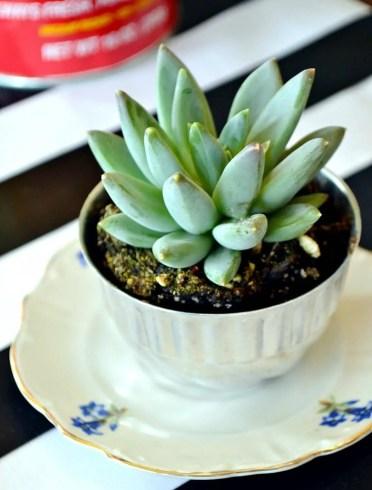 06c-teacup-mini-garden-ideas-homebnc-v2
