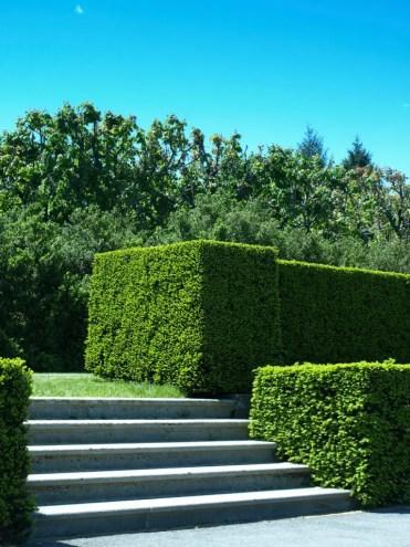 2-garden-hedge-designs-768x1024-1
