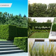 Kinds of garden hedge that will be awesome for your outdoor decoration2