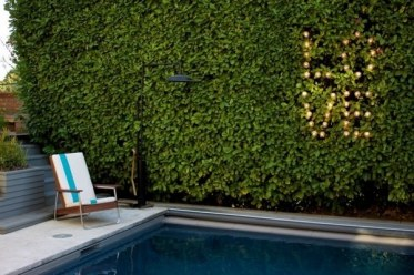 Hedge-design-ideas-privacy-protection-pool-light