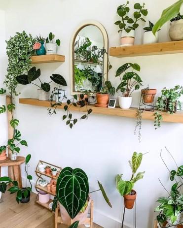 00-feature-plant-shelves-domino-fancyplantschic