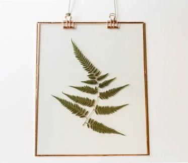 1-fern-white-background