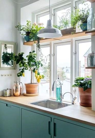 Window-shelf-plants-in-the-kitchen