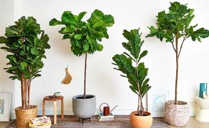 Create-plant-corner