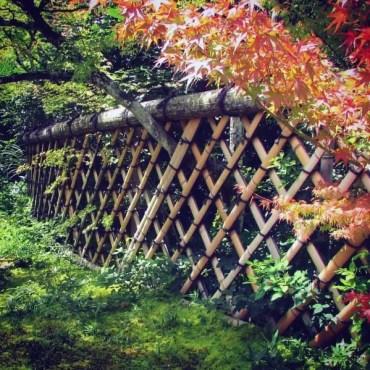 Unique-bamboo-fence-designs
