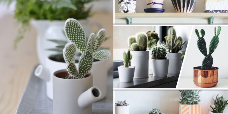 25 mini cactus designs for your home greenery2