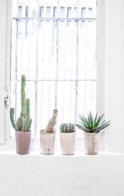 Kleine-Kaktus-Dekoration-Ideen20