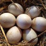 logicamente-cesta-de-huevos