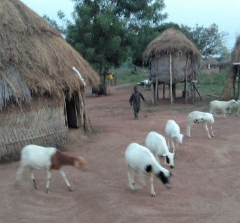 Pastoralist settlement at Eruwa