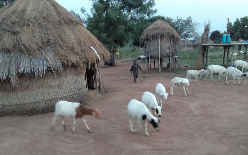 Pastoralist settlement at Eruwa