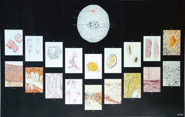Celula si tesuturile umane 3