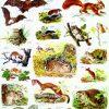 Animale salbatice II