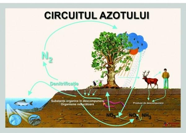 Circuitul azotului 3