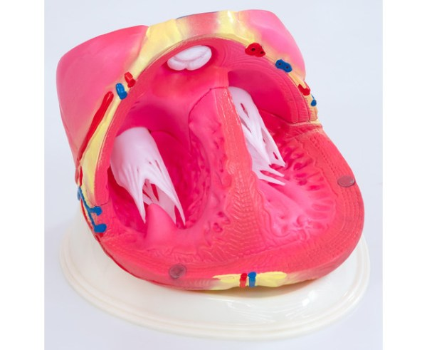 Inima umana - model Mare 9