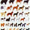 Cele mai populare rase de caini din lume