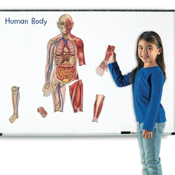 Corpul uman - set magnetic 3