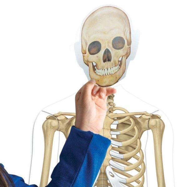 Corpul uman - set magnetic 7