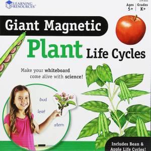 Ciclul vietii la plante 12