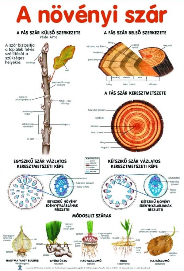 Set planse botanica 6